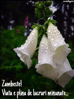 flori ganduri curate