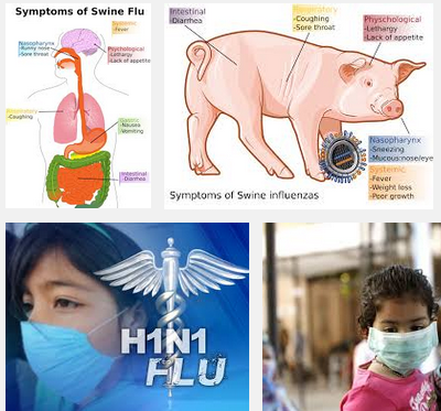 essay swine flu 2009 Swine flu research paper swine flu is a disease that has placed a burden on humanity for many years the virus of swine flu has a very intriguing history as well swine flu had originated from the first influenza pandemic in 1918 the actual swine flu virus had come from a pig in iowa in 1931 two.