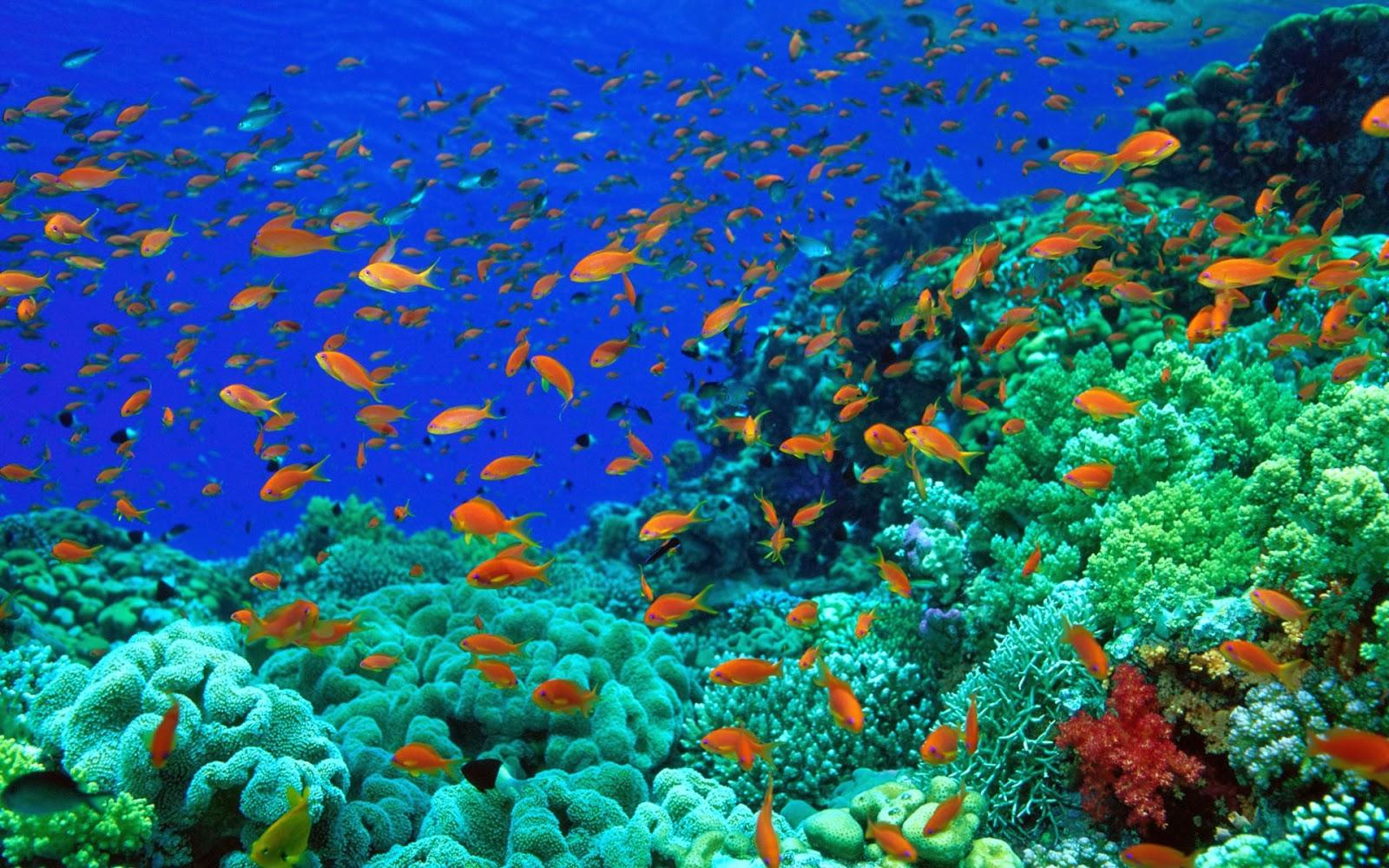 Daftar Wallpaper Pemandangan Bawah Laut Hd Bergerak
