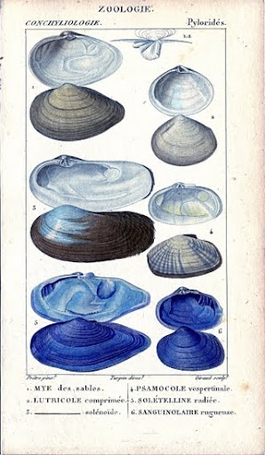 free clip art picture sea life