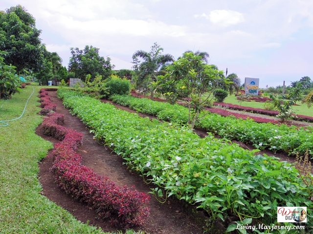 Sonrisa Farm in Camarines Sur