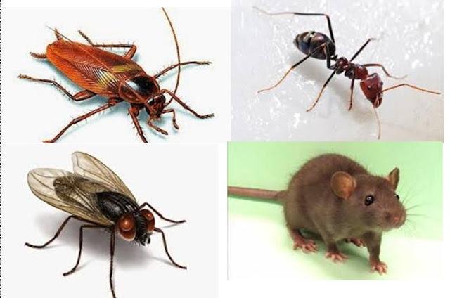 MUJARAB...!!! Begini cara terbaik mengusir Kecoa, Semut dan Nyamuk di Rumah Anda.