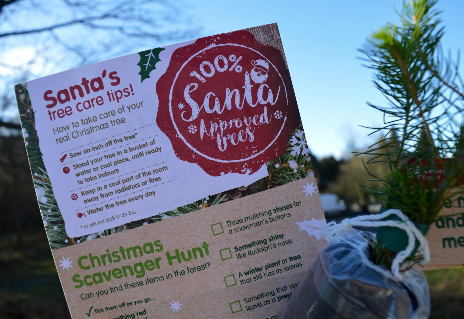 Why you should choose a real, sustainable Christmas tree from a Forestry Commission Forest (Hamsterley Forest in Durham and Kielder Forest in Northumberland) - Santa approved certificate, Christmas scavenger hunt and tree care tips