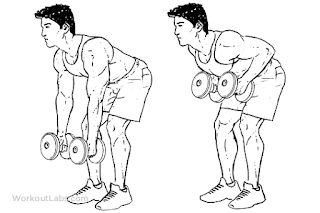 1. Dumbbell Bent Over Row