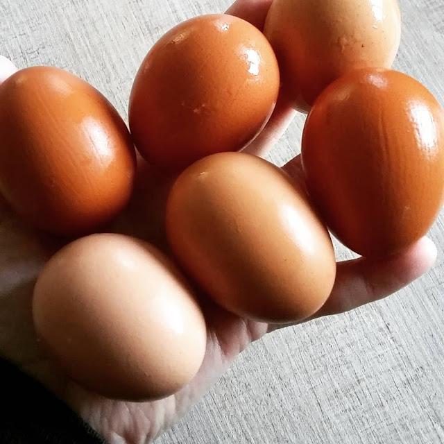Kombinasi Madu Dengan Putih Telur untuk menghilangkan jerawat