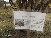 Japanese cornel information - Kyoto Botanical Gardens, Japan