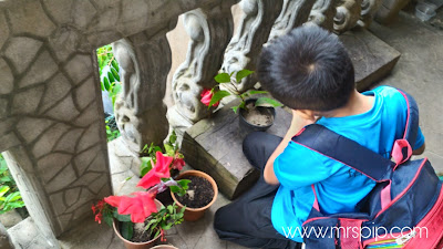 cara anak lelaki tanam bunga