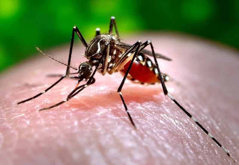 What is dengue? Symptoms, protection and eradication of Dengue.