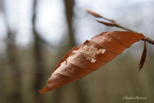winter leaf shape by AppleApricot