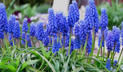 anh hoa chuong xanh dep nhat