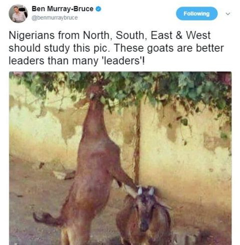 HOW UNA SEE AM: These Goats are Better Than Many Leaders