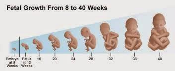 Ke An Dimulai Dari Proses Pembuahan Konsepsi Sampai Sebelum Janin Lahir