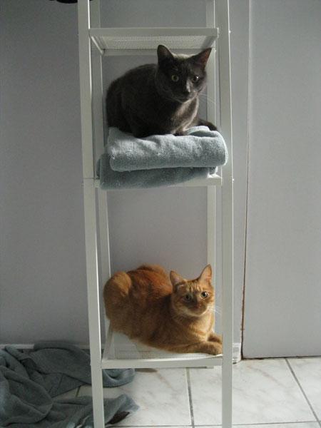 katia au pays des merveilles les chats les chats les. Black Bedroom Furniture Sets. Home Design Ideas