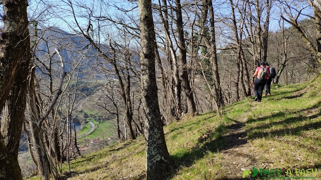 Sendero entre bosque hacia Tornín