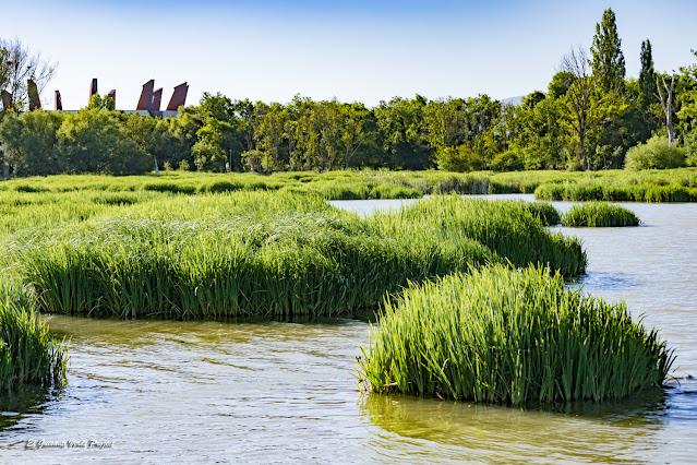 Parque de Salburua, laguna del humedal