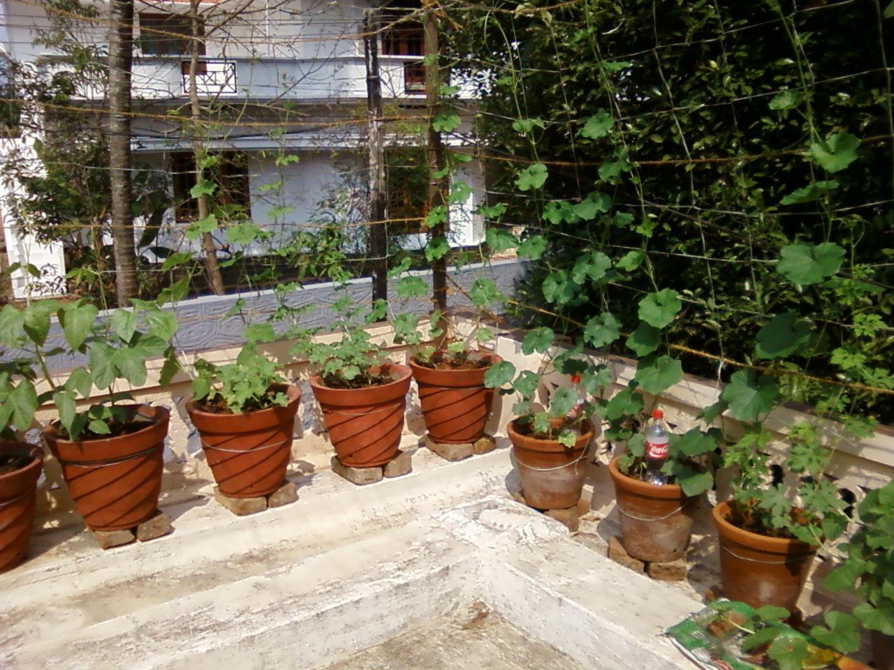 Teen's Kitchen Garden: Terrace kitchen garden I