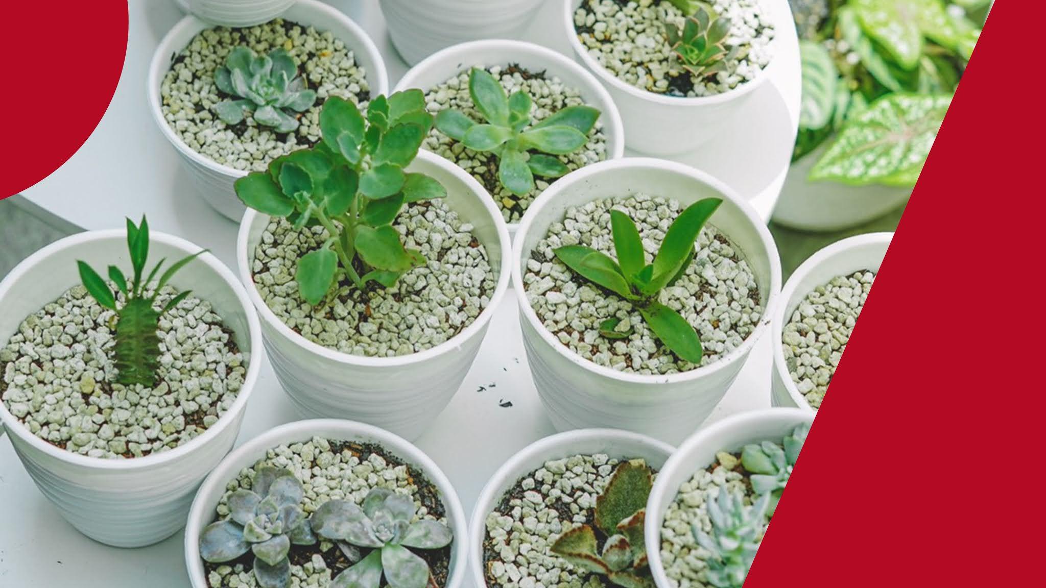 hobi tanaman hias menghilangkan stres