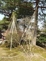 Shrubs protected for winter with ropes - Kenroku-en Garden, Kanazawa, Japan