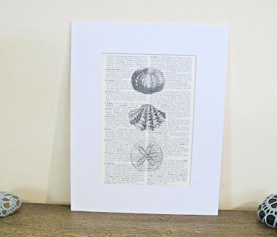 dictionary page art print seashell shells beach theme domum vindemia