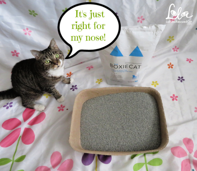 litter box tips|boxiecat