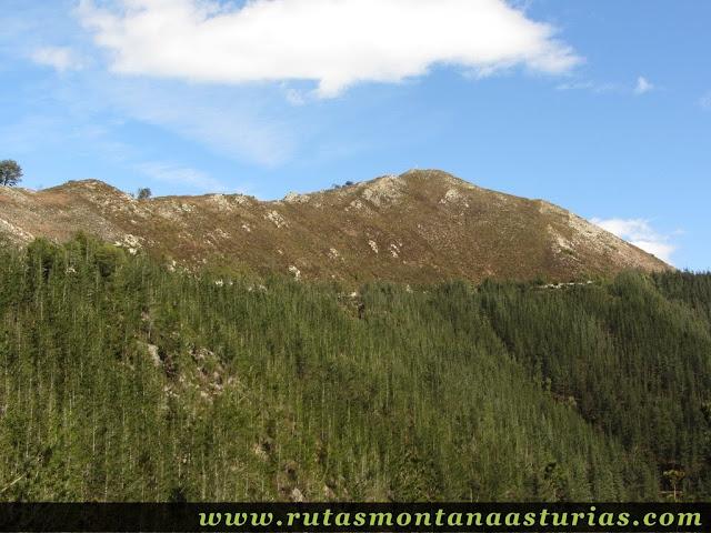 Ladera con pinos del Pico Moru, en Parres