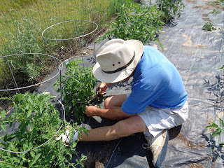 Person in white hat and blue shirt tending a garden.
