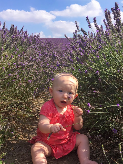 A baby sitting between 2 rows of lavender at Hitchen lavender fields