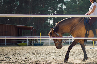 A dun horse working long and low in an outdoor riding school