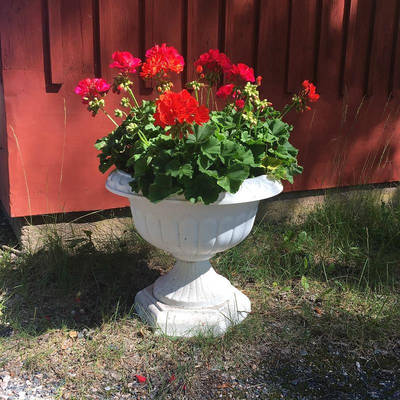 vanhan talon kukat