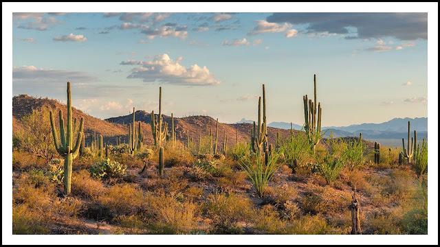 ترجمات علمية | الصحراء (بيثاني بروكشاير)