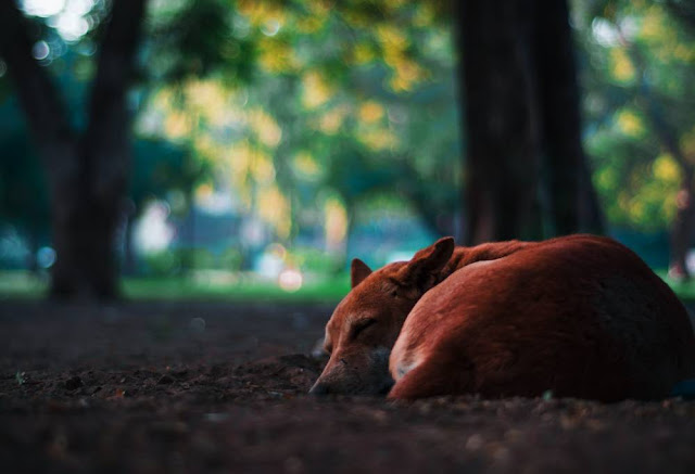 curiosidade sono animais ambiente de leitura carlos romero