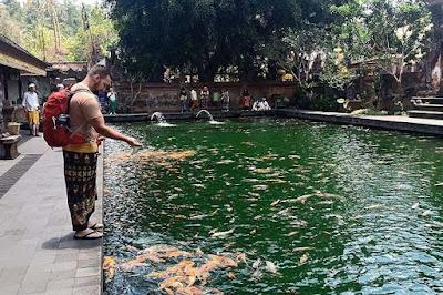16 Ide Kolam Ikan Minimalis Lengkap Dengan Foto