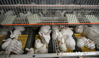 Complete Guide on How To Start A Rabbit Farming Business