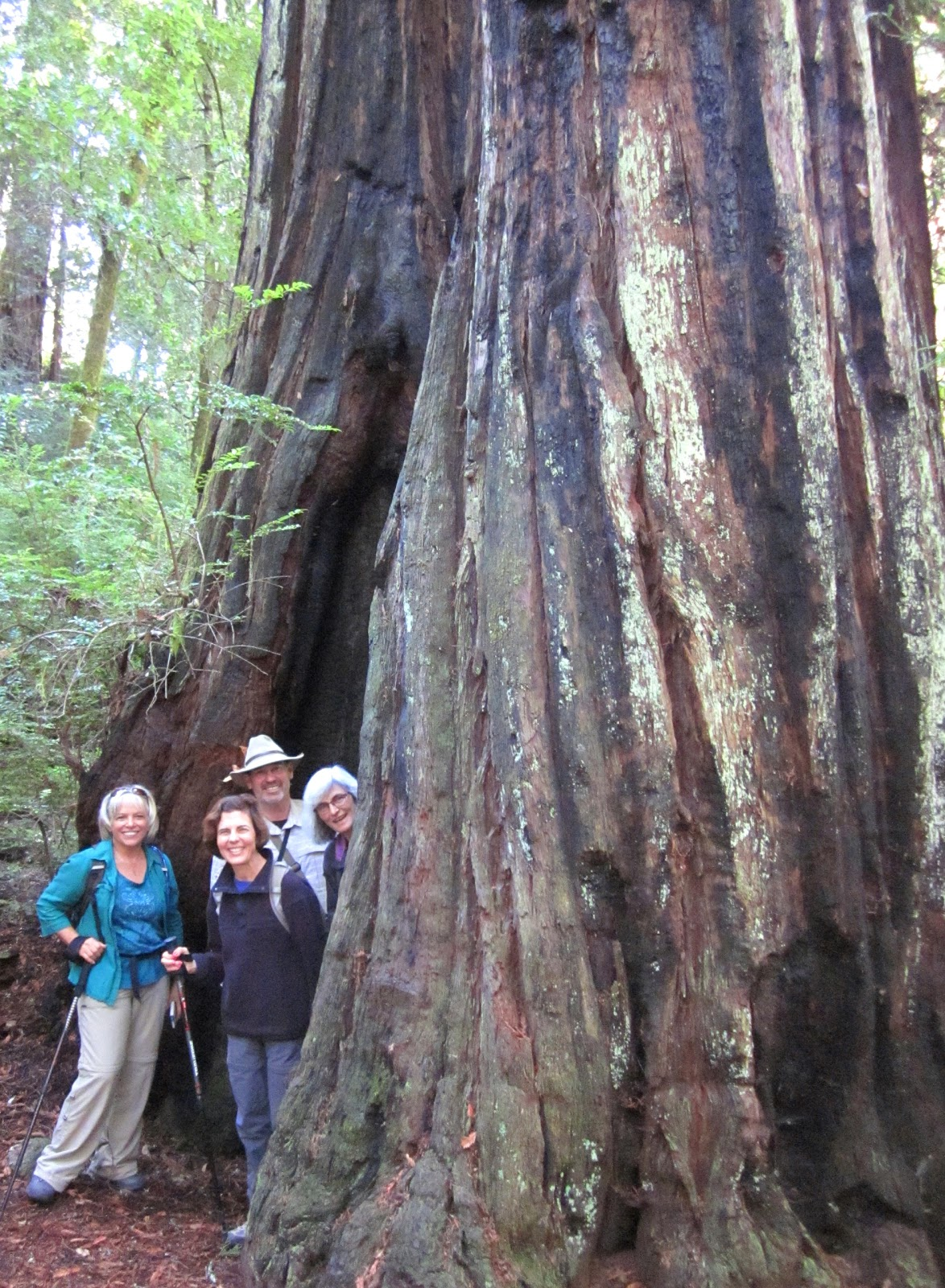 Santa Cruz Mountains Trails: Pescadero Creek County Park ...