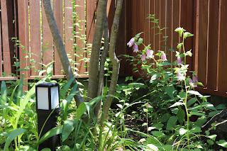 山野草盆栽教室 睦草アトリエの庭