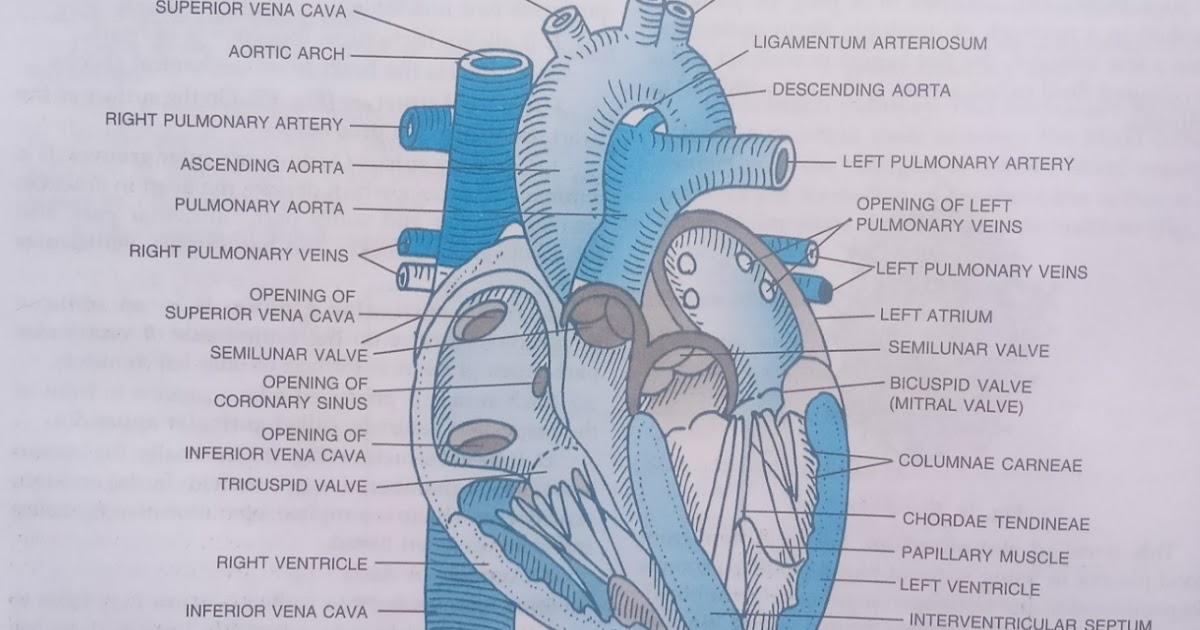Body fluids and circulation class 11 | Part-3 | chapter ...