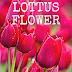 LOTTUS FLOWER