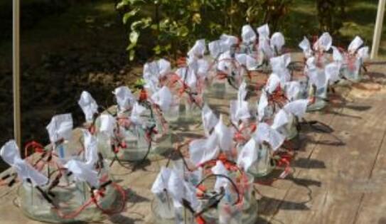 আলোর উৎসবে ভেজা কাপড় থেকেই উৎপাদিত বিদ্যুৎ দিয়েই আলোকিত হবে খড়গপুর আইআইটি 2