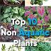Top 10 Non Aquatic Plants to Avoid in Aquarium