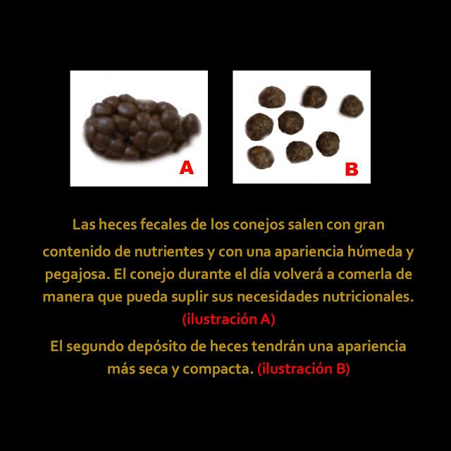 tecveteorienta.blogspot.com