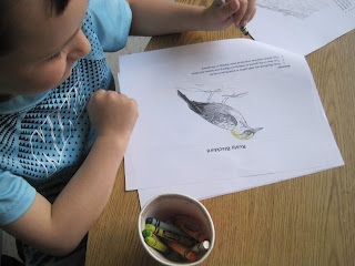 Student learning about pond animals