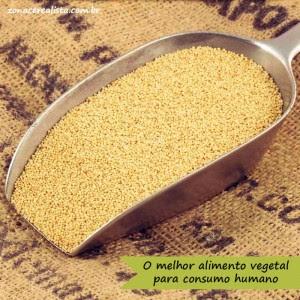 melhor alimento vegetal para consumo humano