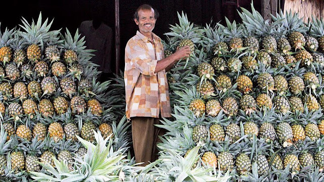 Nepal to miss north Bengal pineapples