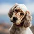 Γιατί οι σκύλοι γέρνουν τα κεφάλια τους;