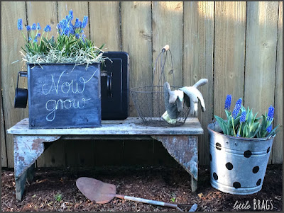 DIY Chalk Paint Planter, shared by Little Brags at The Chicken Chick's Clever Chicks Blog Hop