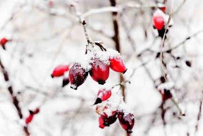 فوائد زيت ثمر الورد للبشرة