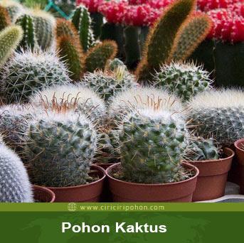 ciri ciri phon kaktus