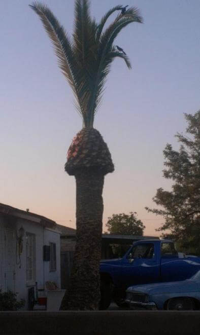 You Will Need To Look At These 15 Confusing Pictures Twice - What A Fascinating Palm Tree!