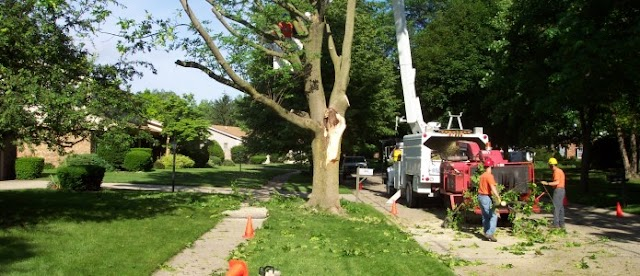 Do You Have a Risky Tree on Your Property?
