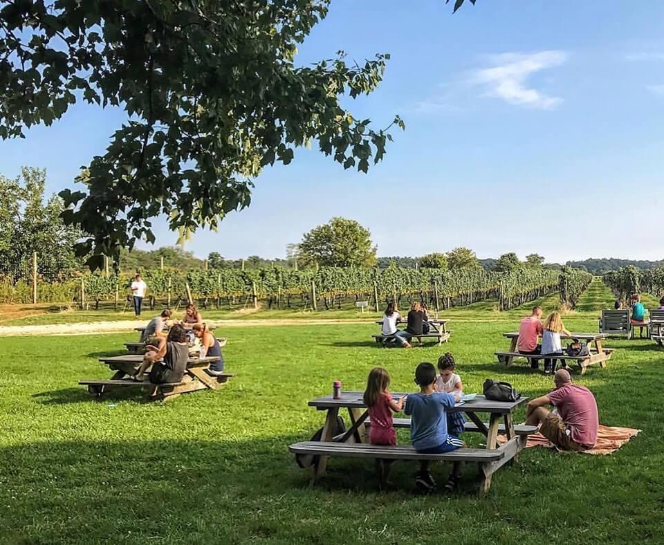 Vineyards on Long Island